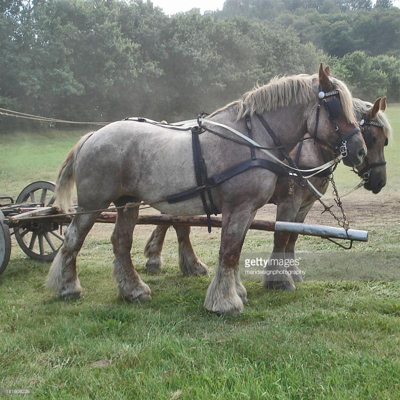Draughthorse
